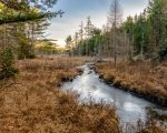 Acadian Ridge Trail