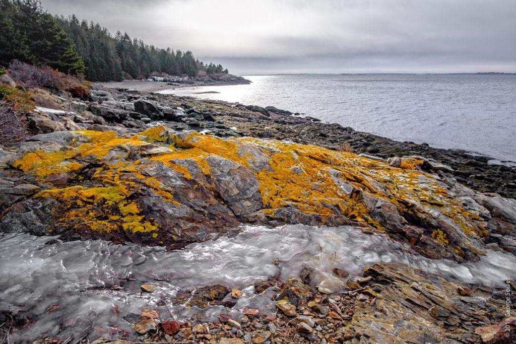 Island Lichen