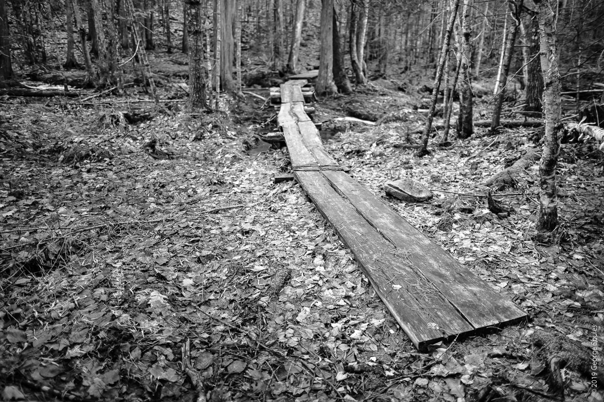 Acadian Ridge Trail (5)